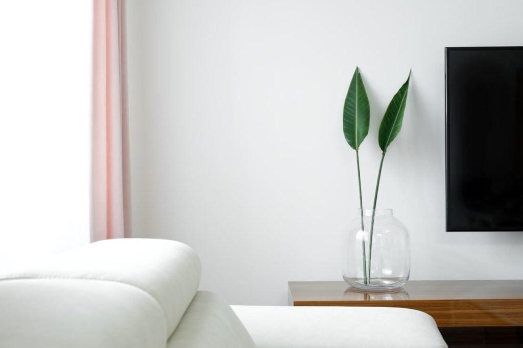 rośliny poznań